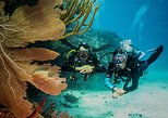 Double dive package for certified divers - Scuba dive in Playa del Carmen