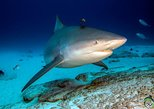 Bull Shark Scuba Diving Experience - 2 tank dive in Playa del Carmen