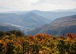 Douro Wine Rebels and Pioneers