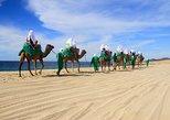 Camel Ride & Encounter