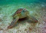 AkumalMarine Turtle Daily Tour
