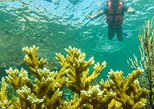 Local Fishing Plus Snorkeling Tour in Isla Mujeres