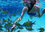 Snorkeling & Dolphin Sightseeing Sail on the Privateer Catamaran
