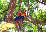 Private Tour: Carara National Park Bird Watching Tour