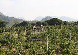 2-Day Tour Cycling Khao Yai Wine Trails from Bangkok