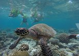 things to do in male maldives | go on a thrilling snorkeling safari