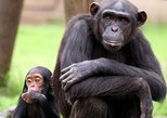 Full-Day Chimp Eden and Botanical Gardens tour from Hazyview