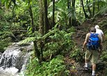 El Yunque National Forest Half Day Tour