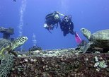 Small-Group Shallow Reef Dive in Honolulu