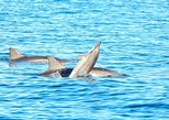 Swim with Wild Dolphins & Benitiers Island With Breakfast, Lunch & Transport