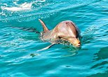 Nature Discovery Guided Tour: Dolphins, Tortoises, Crocodiles and the Wild South
