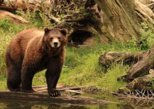 Sitka Shore Excursion: Sitka Bears, Raptor Center, and Totem Park Tour