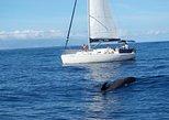 Avistamiento de delfines y ballenas en un lujoso velero en Tenerife. Tenerife, ESPAÑA