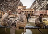 Full day Private Jaipur Tour with Monkey Temple and camel Ride