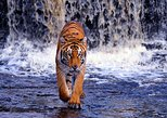 Private Sunderbans Day Tour with Exclusive Boat and Lunch