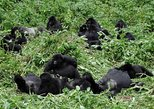 16 Days Uganda and Tanzania Wildlife Safaris