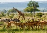 2 DAYS MIKUMI SAFARI PACKAGE - SHORT WEEKEND GATEWAY SAFARIS
