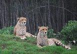 Sunrise Cheetah Combo