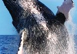 Oahu Whale-Watching Excursion