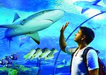 Australia & Pacific - Australia: Cairns Aquarium Admission Ticket