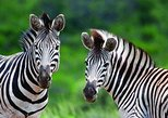 Hluhluwe Umfolozi Park Day Trip from Durban