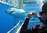 Full Day Shark Cage Diving Experience with Private Transport