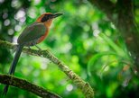 Birdwatching Tour at Arenal Natura Ecological Park