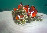 Tunku Abdul Rahman Marine Park Snorkeling with Coral Flyer Zipline