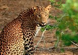 2 Days Tour to Galle & Yala National Park From Negombo