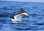 Dolphin Watching Cruise from Puerto Escondido