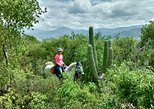 Exotic Flora Half-Day Guided Horseback Riding Tour