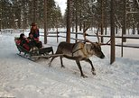 Lapland Reindeer Safari From Saariselkä