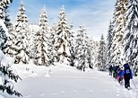 Snowshoe Through Vancouver's Winter Wonderland