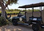 Kruger National Park Full Day Safari