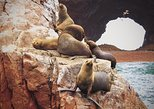 Full-Day Ballestas Islands and Paracas National Reserve Tour from Paracas