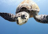 Grand Cayman Certified Scuba Diving Excursion