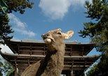 Discover Traditional Nara Walking Tour (Half day)