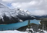 Lake Louise and Icefield Parkway Sightseeing Full-Day Tour