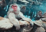 Nozawa Fire Festival and Snow Monkey from Hakuba & Nagano