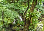 St Kitts Rainforest Tour