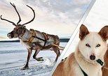 Lapland Reindeer and Husky Safari from Rovaniemi