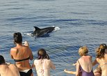 Spectacular Land and Sea Pack Jeep East Tour and Dolphins Watching