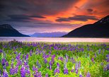 Turnagain Arm Tour