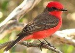 Tikal National Park Birding Day (Peten)