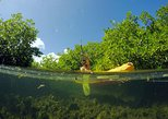 Magic Mangrove Paddle in Beef Island Lagoon