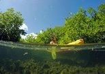 Magic Mangrove Paddle in Beef Island Lagoon