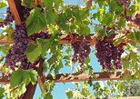 Paphos Private Tour - Wineries & Wine Tasting w/ Lunch Troodos Mountains 7hrs