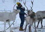 Besichtigung mit Rentieren in Tromso