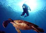 Turtle Reef Kayak and Snorkel