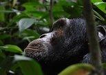 Gorilla Tracking Uganda and Rwanda